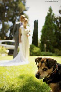 Pet pooch at Wedding in Kent